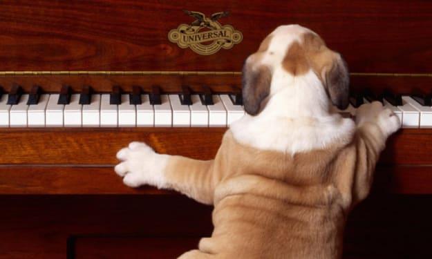 Good Boys Deserve Good Pay: PETA Protests Latest All-Dog Musical over Unfair Pay