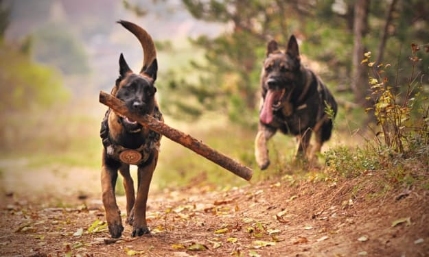 The Value of Investing in Quality Dog Training