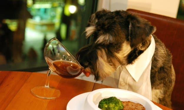 Top 12 Human Foods That Dogs Should Avoid