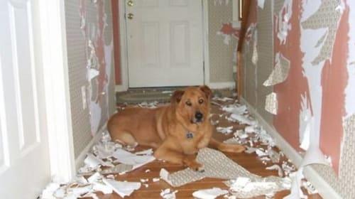 When a Pet Becomes a Problem