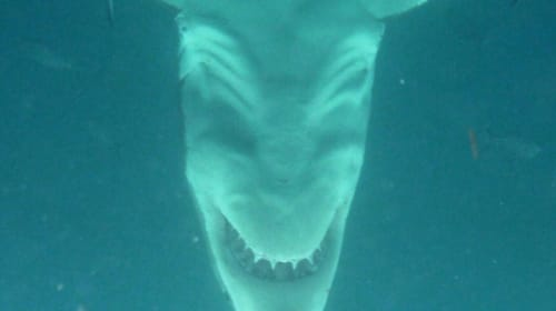 Sharks; Are They Evil?