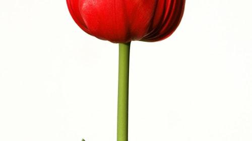 Flowers for Mycroft