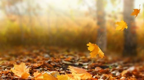 5 Books for Autumn