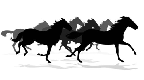 The Movement of Horses
