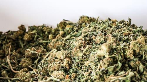 Smoking CBD Hemp Flower over CBD Oil