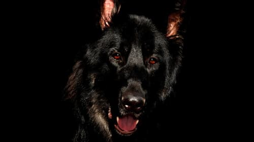 Storm Drain Dog