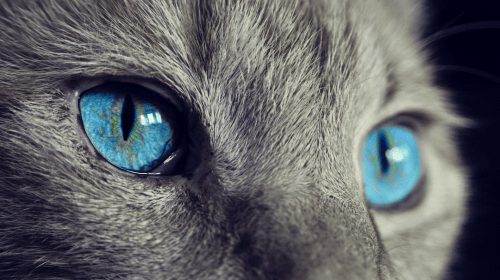 9 Superpowers Your Cat Has