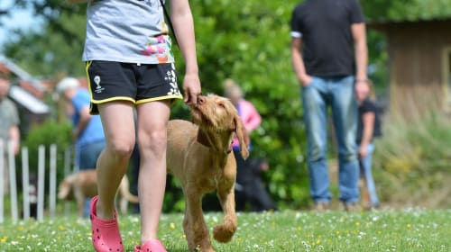 Emotional Benefits for a Family of Owning a Dog