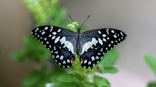 The Butterfly Effect: Kindness Matters