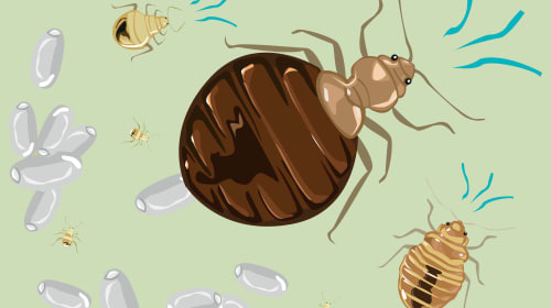 Dodging Bed Bugs During Travel: 5 Vital Tips