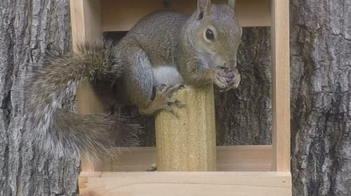 Five Facts You Don't Know About Squirrels!
