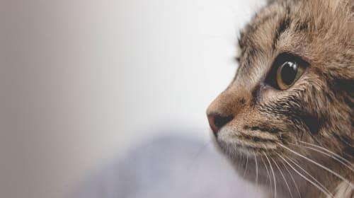 Unlucky Cat - Lucky Look-Alike