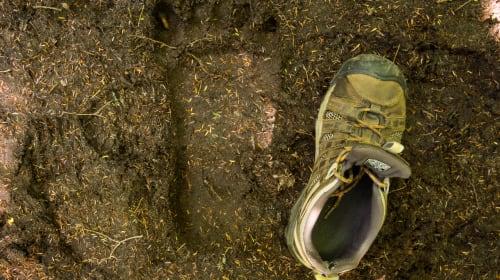 Bigfoot Was Here?
