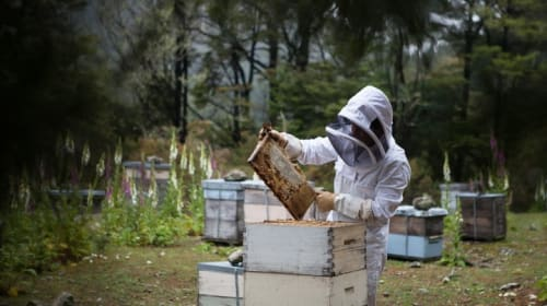 Neonicotinoids: A Bee's Death Sentence