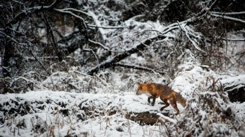 Why Winter Hunting is the Best Type of Hunting