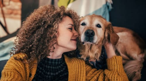 A Quick Insight on Emotional Support Animals