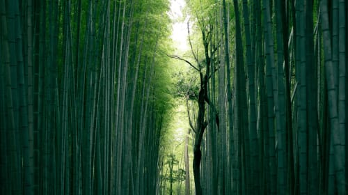 Is Bamboo the sustainable material of the future?