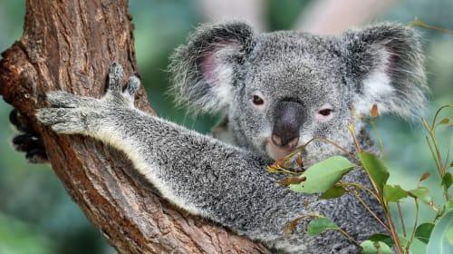 Care About Australia's Wildlife: Please Don't Give Money To PETA