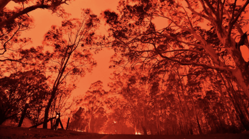 The Australian Bushfires - Horror Stories about a Nation Wide Disaster