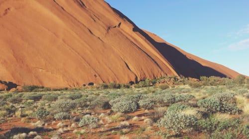 Desert Pastoral