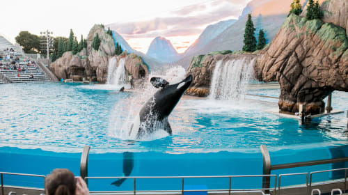 should whales be in captivity?