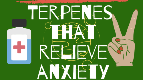 3 Terpenes That Alleviate Anxiety
