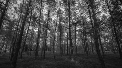 Black Forest pt 3