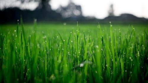 7 Smart Lawn Fertilizer Tips