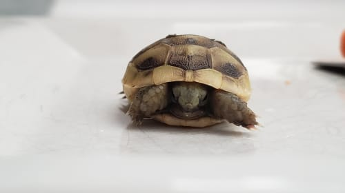 A Photo That Turned Into A Turtle