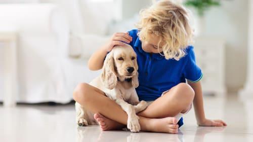 Pets: The Best Parenting Tutor