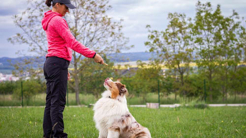 How to Turn Your Love for Dogs Into a Career