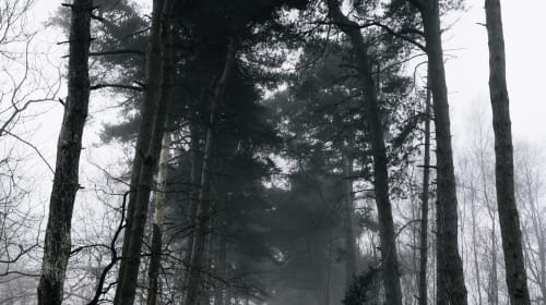 The Zombie Hunt