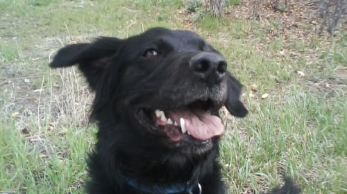 Mad Max the Wonder Dog