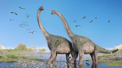 Baby dinosaur to big brother dinosaur