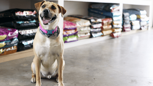 Care And Concerns For Choosing The Right Food From The Pet Food Stores