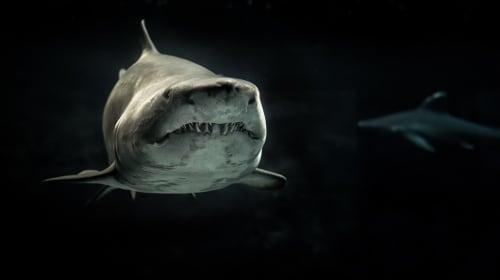 'Shark Tank' Story