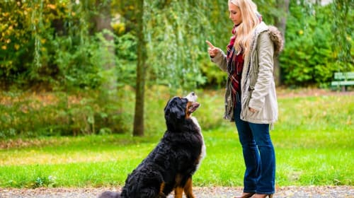 The most effective method to Leash Train Your Dog