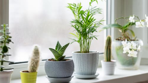 5 Mistakes People Make With Their Indoor Plants