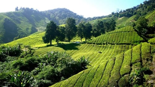 Cool Weekend Staycations in Malaysia Just a Few Hours Drive Away (If You're a Local)
