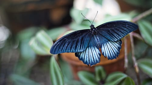 Butterfly: Stillbirth and Adoption