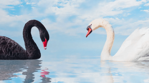 Black Swan and the Historical Revisionism