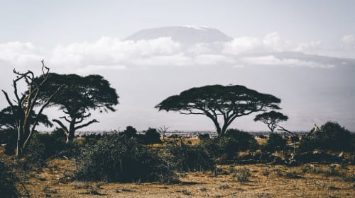 Four Tips For Your Safari Vacation