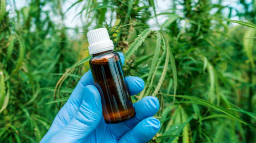 CBD - The Other Healing Compound in Marijuana