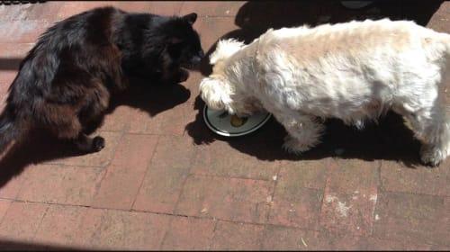 Pets Raise Your Love Quotient