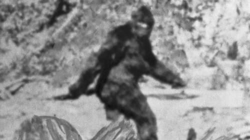 Fun facts about bigfoot