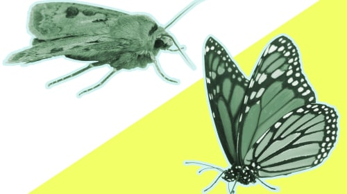 The Untold Truth About Moths