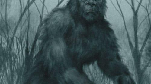 Bigfoot investigation