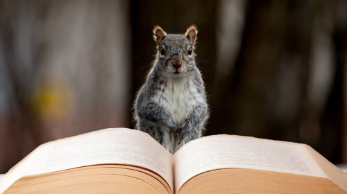 Tame Your Squirrel Brain: Study Tips for ADD Students