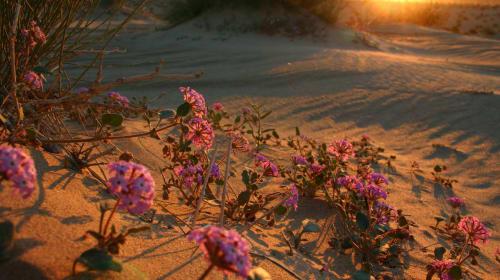 Le rose di Atacama - BEAUTIFUL FROM THE NORMAL THINGS