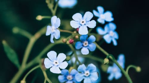Forget Me Not. Forget Me Still.
